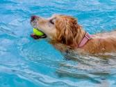 Cuidados com cães no verão !