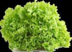 Alface Mimosa Kimoto